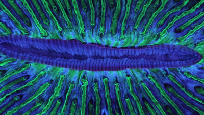 Review: Animal Collective takes a psychedelic scuba dive on 'Tangerine Reef'