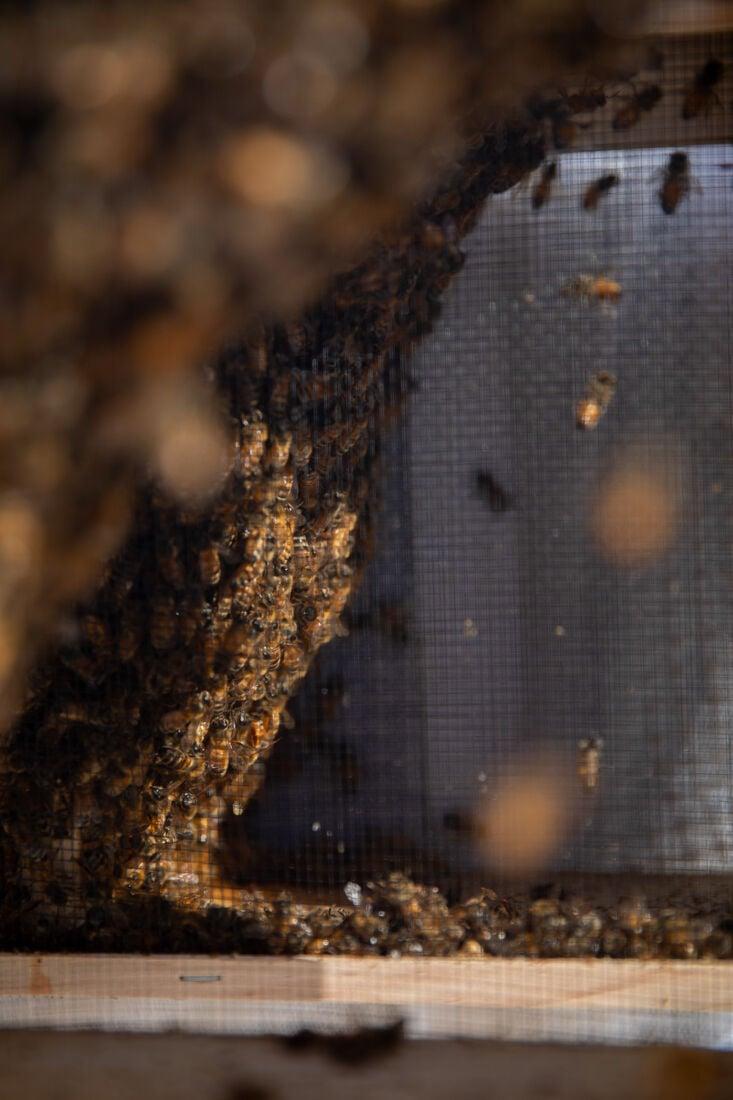 2021.4.23.EMG.MFK.Bees-1.jpg
