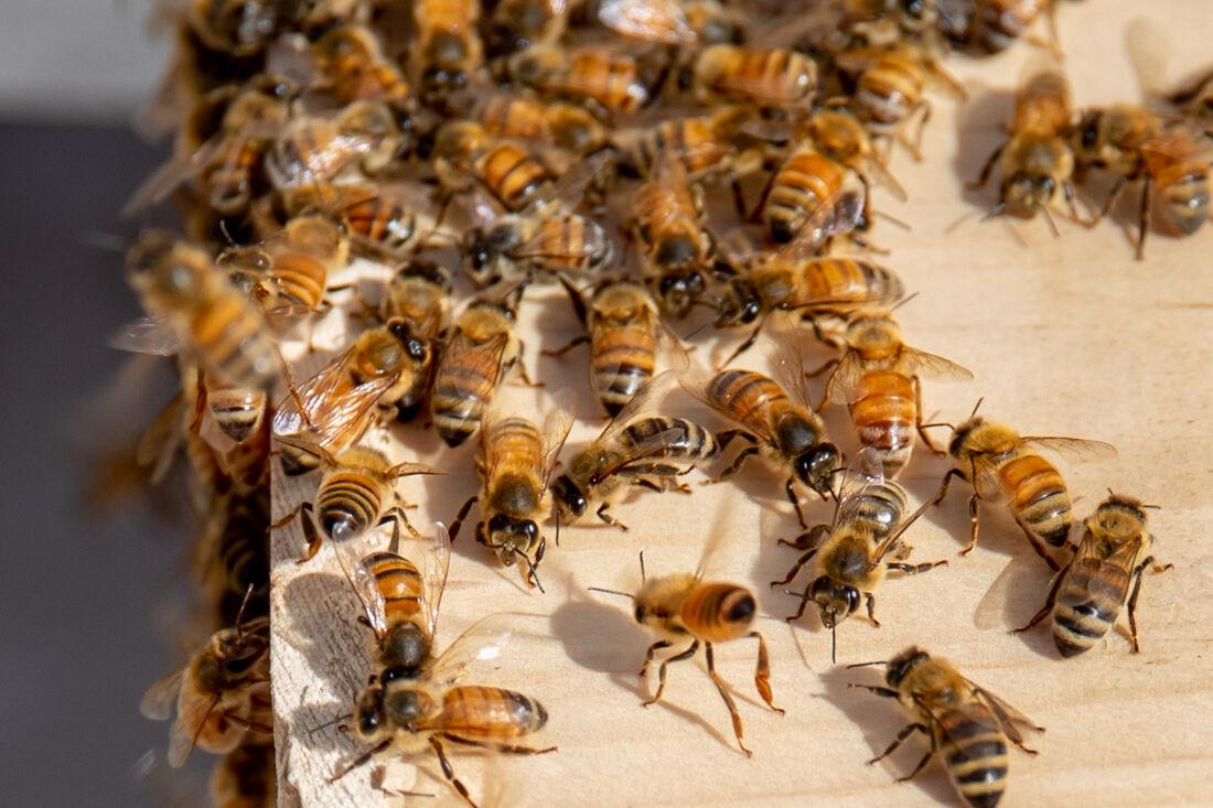 2021.4.23.EMG.MFK.Bees-18.jpg