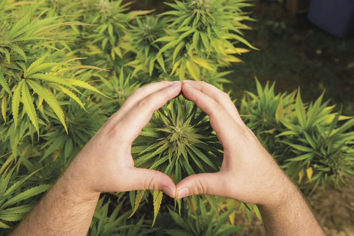 Dispensary or dealer—who should you get it from?