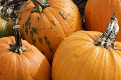 Pumpkin spicy: the 7 strangest pumpkin spice fall products