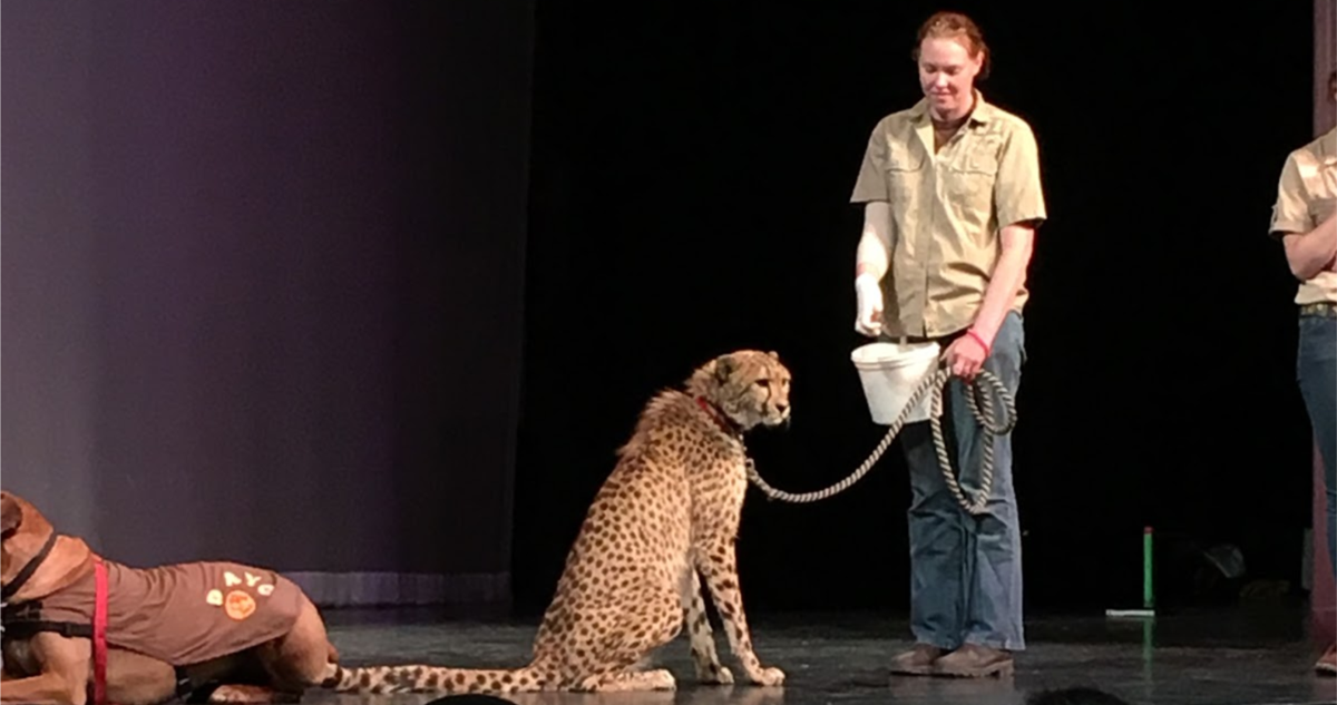 UO Africa Night event showcases dance, music and a cheetah