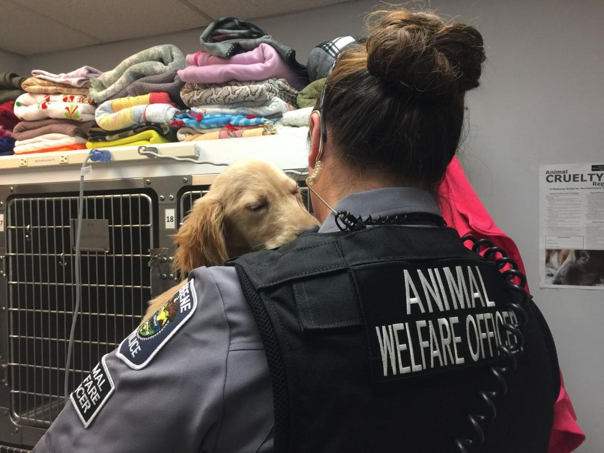 Police rescue underweight puppy after UO student locks it in abandoned apartment for a month