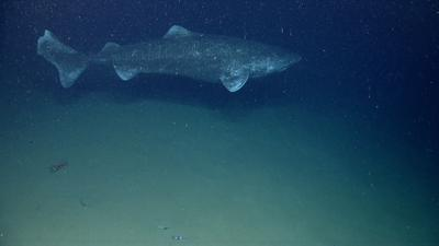 Science Pick of the Week: Research shows sharks found in