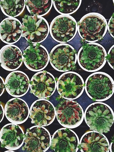 Feel Good House Plants