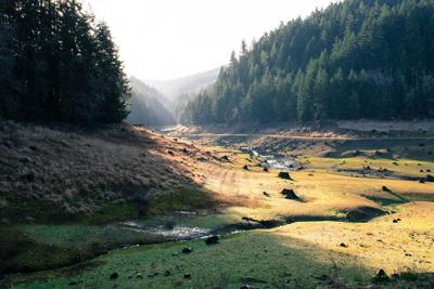 Eugene Landscape