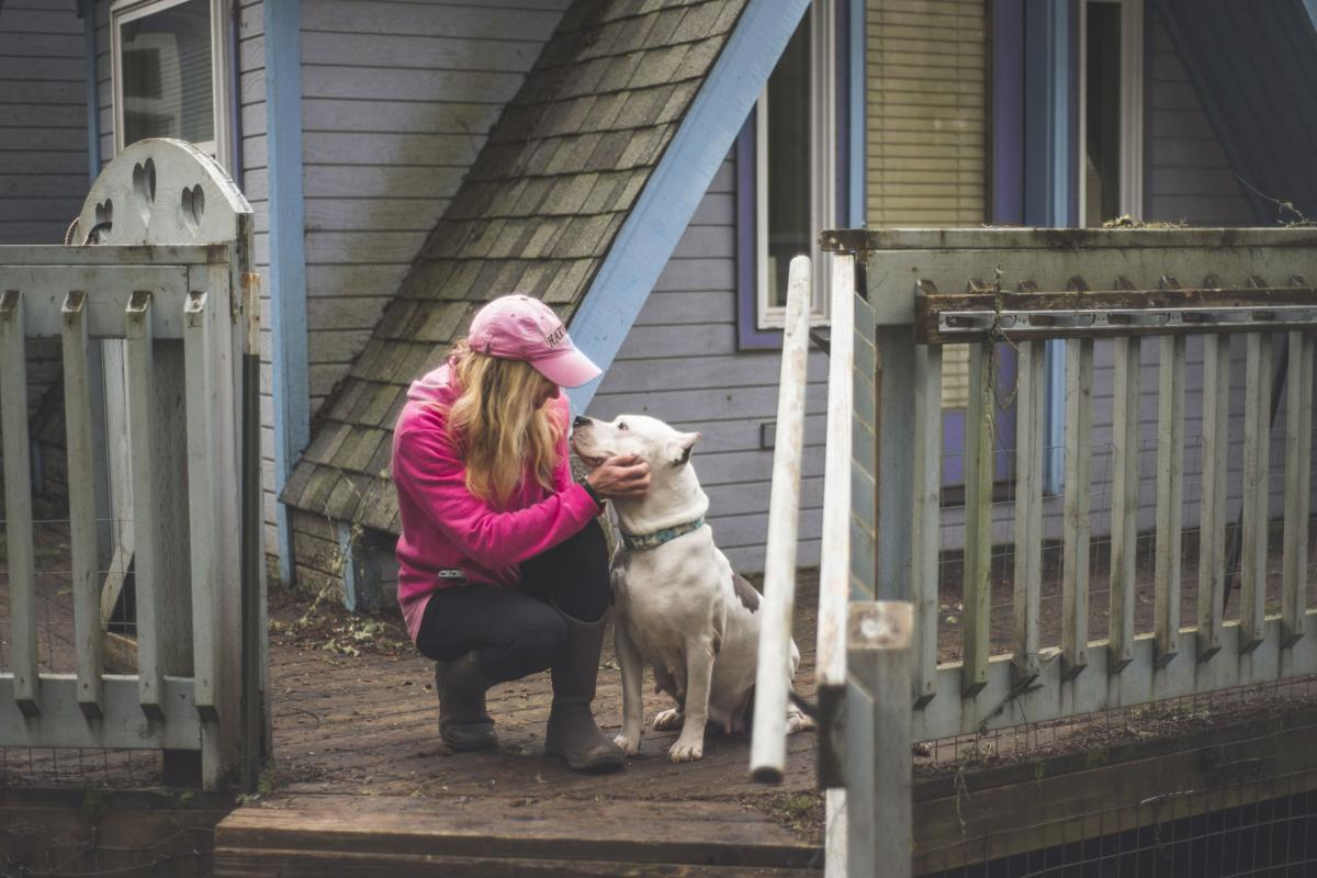 All Dogs Allowed: One shelter's quest to nurture the nation's unwanted pets