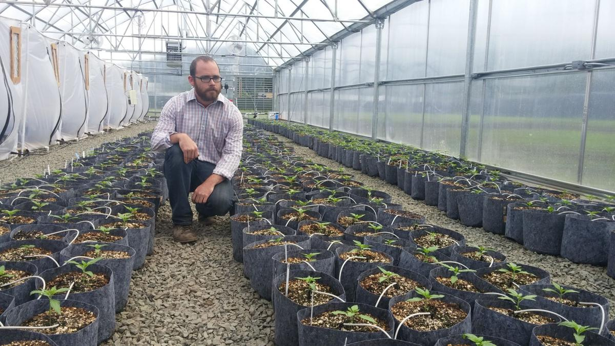 New Breed Seed: Lane County's first licensed cannabis grower