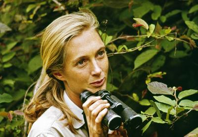Review: 'Jane' provides an intimate look into the life of iconic primatologist Jane Goodall