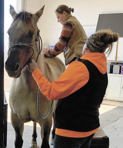 New equipment, new vet bring new care options to Twin Lakes