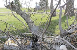 Volunteers needed to clean up Graceland