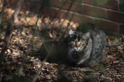 Husker Cats Photo 1