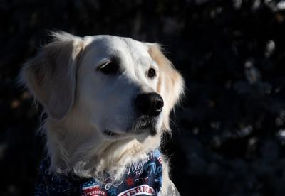 Priscilla, Trinity Lutheran Church's Comfort Dog