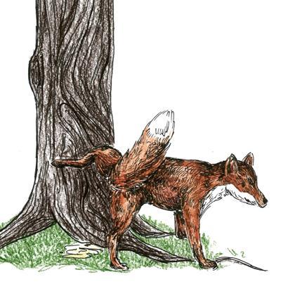 TBT fox urine by Ally Frame