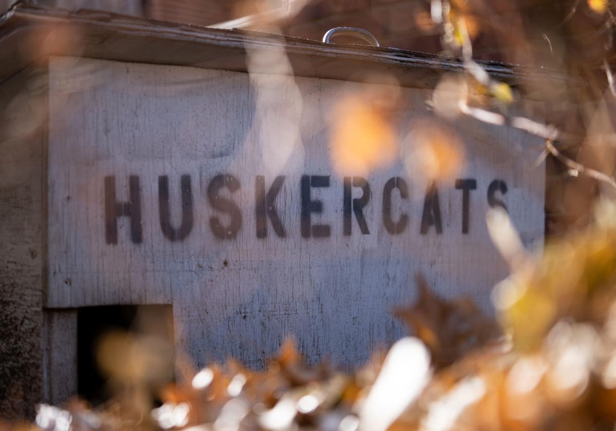 Husker Cats Photo 2