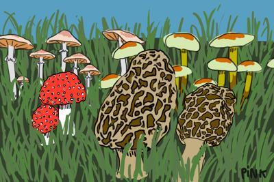 Mushrooms Art