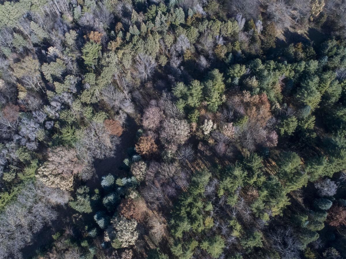 Prairie Pines - Opp 1