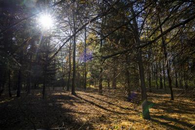 Prairie Pines - Opp 2