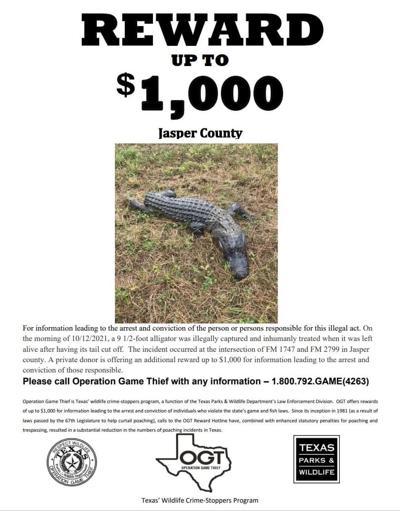 Reward offered after inhumane treatment of gator