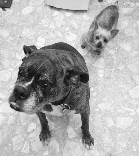 Joann's Pet party, send us your favorite photo of your pet