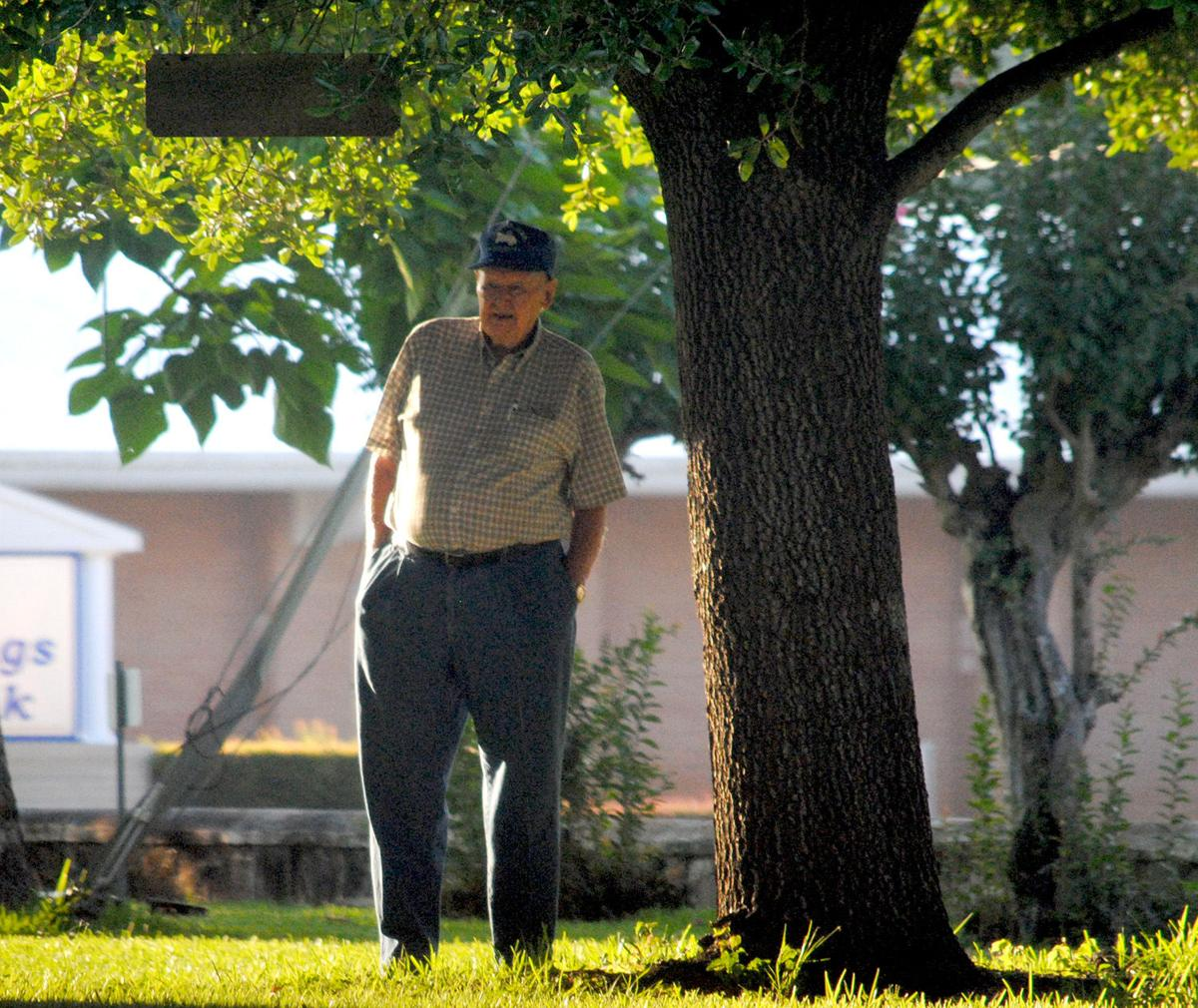 Mr. Red Davis, examines an oak tree on the courthouse lawn