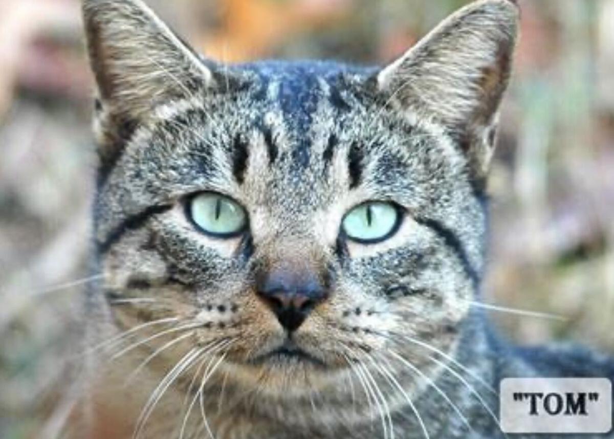 """Tom- the Neighborhood Cat"""