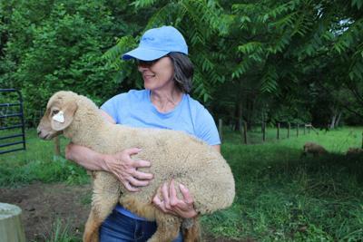Three Sheep Inn Farm