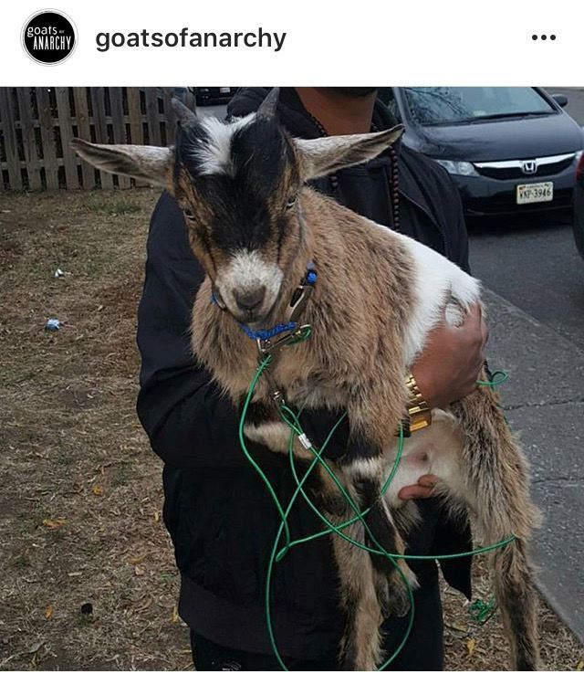 goat related fraternity suspensions lifted at radford state