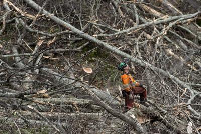 Atlantic Coast Pipeline tree removal