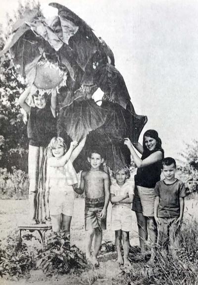 IHBNR: Aug. 26, 1971_giant sunflower