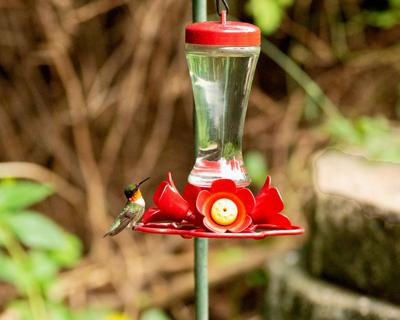 What to know about hummingbirds