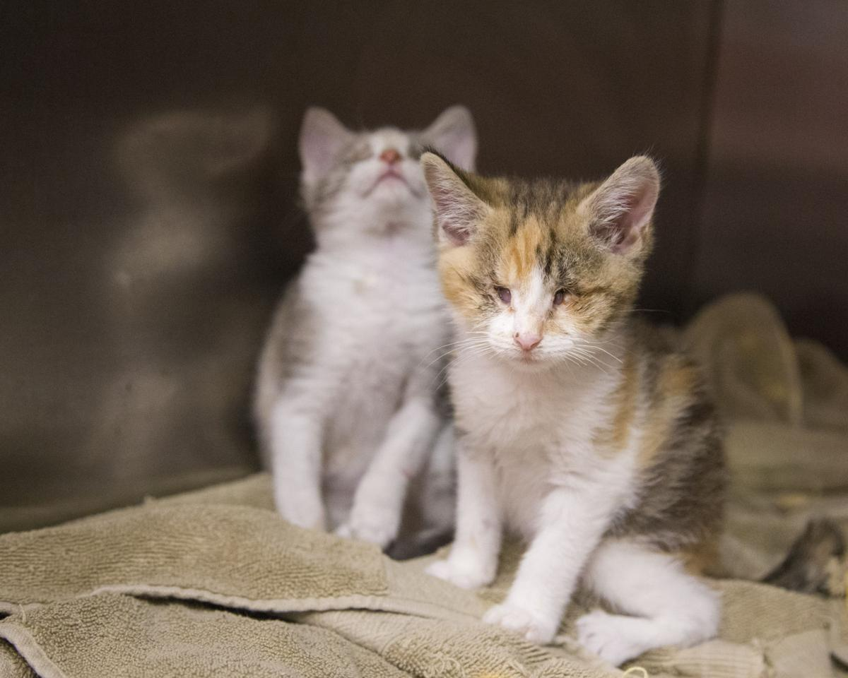 Blind love found in two kittens