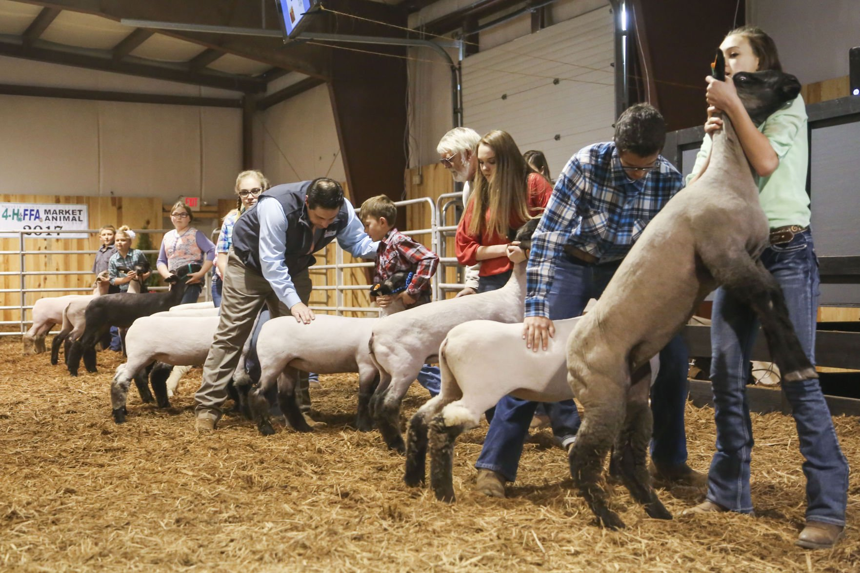 On the lamb: Months of caring for animals pays off for young ...