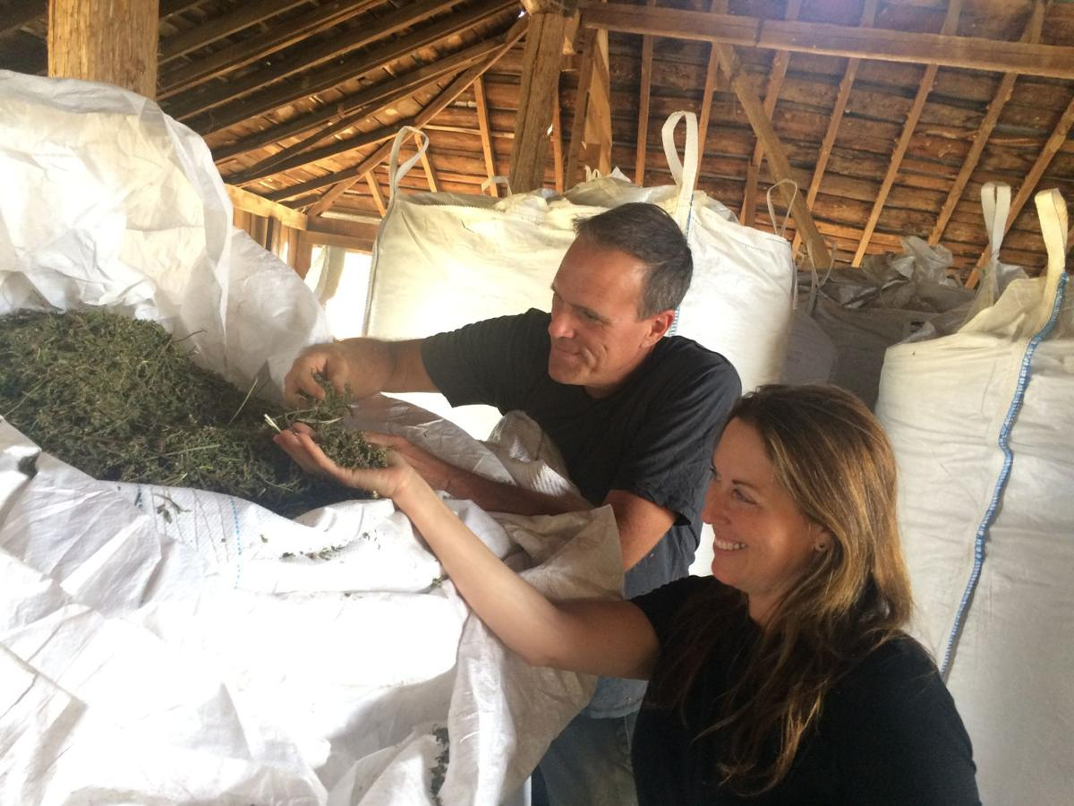 Barbara Miller and Justin Mays check out the hemp harvest at Crescere Farm