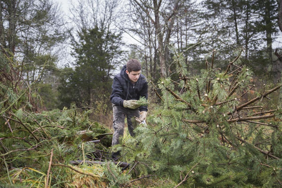 A growing tradition: Boys Home Tree Farm helps teach lessons   News ...