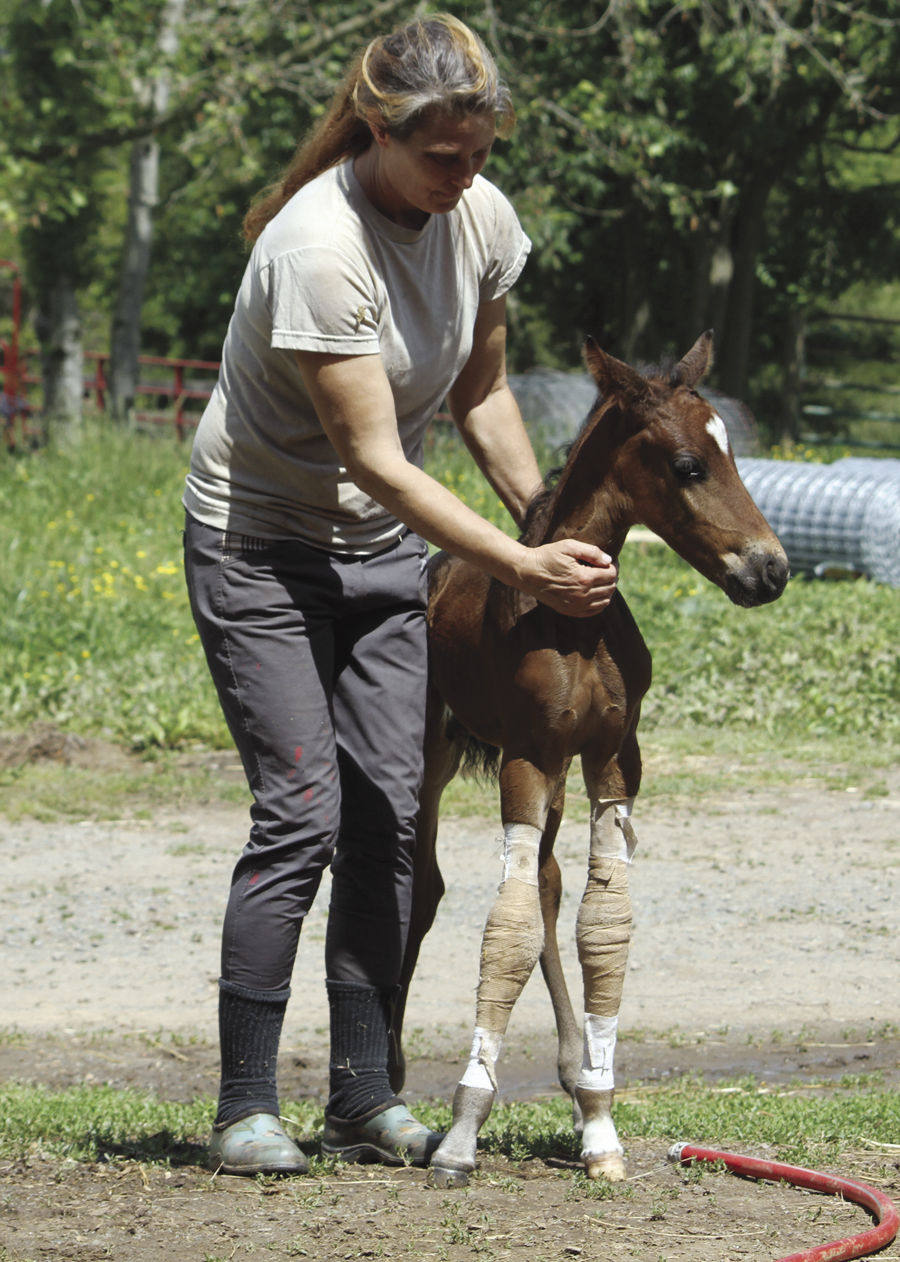 Tiny-the twin foal-2
