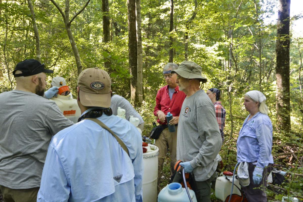 PRISM seeking volunteers, money to fight invasive plants along Blue Ridge
