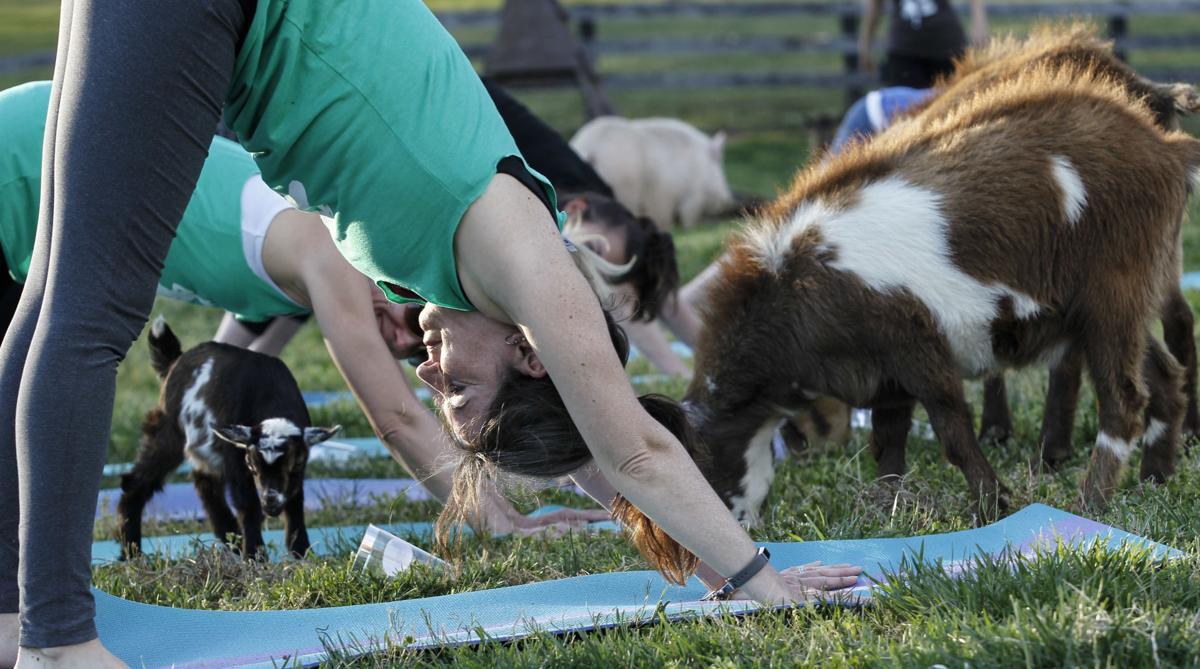 size 40 36ab0 e4a8a 20190410 Goat Yoga1372.JPG