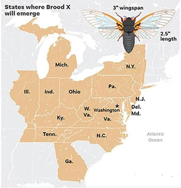 Is a plague of locusts next? What to know about the 17 ...
