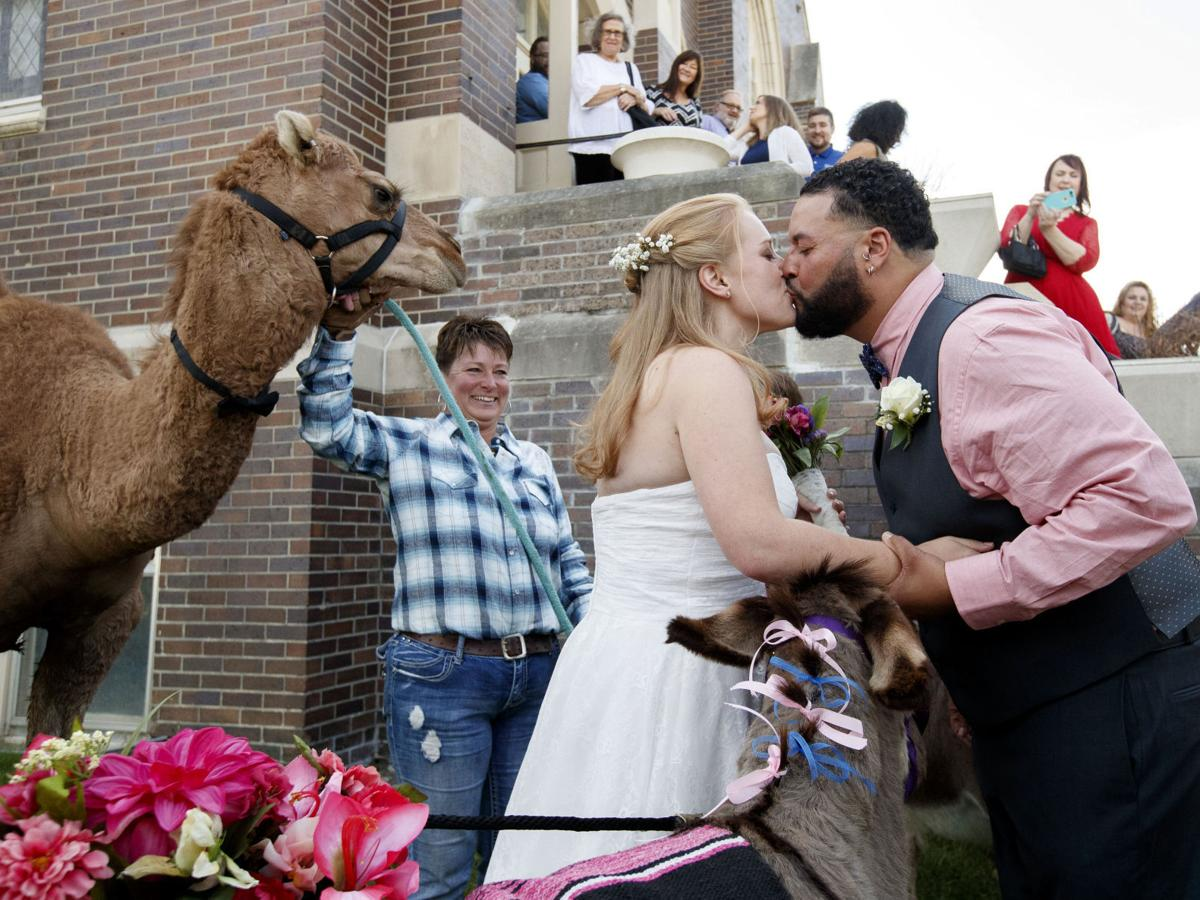 Photos: Nebraska couple wed with camel groomsman, donkey bridesmaids