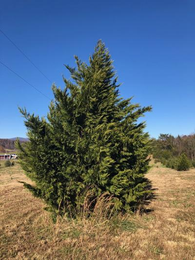 Local tree farms have just what you need this season