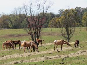 Prosecution claims Peaceable Farm owner spent $200,000 on horse breeding