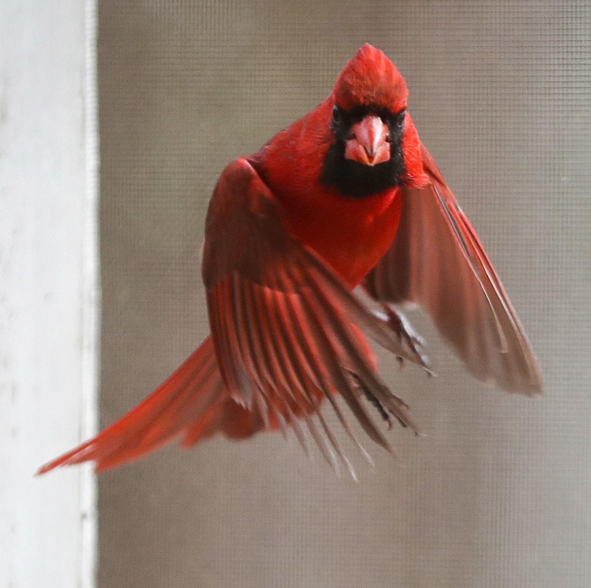 20200111_cdp_news_cardinal480.JPG
