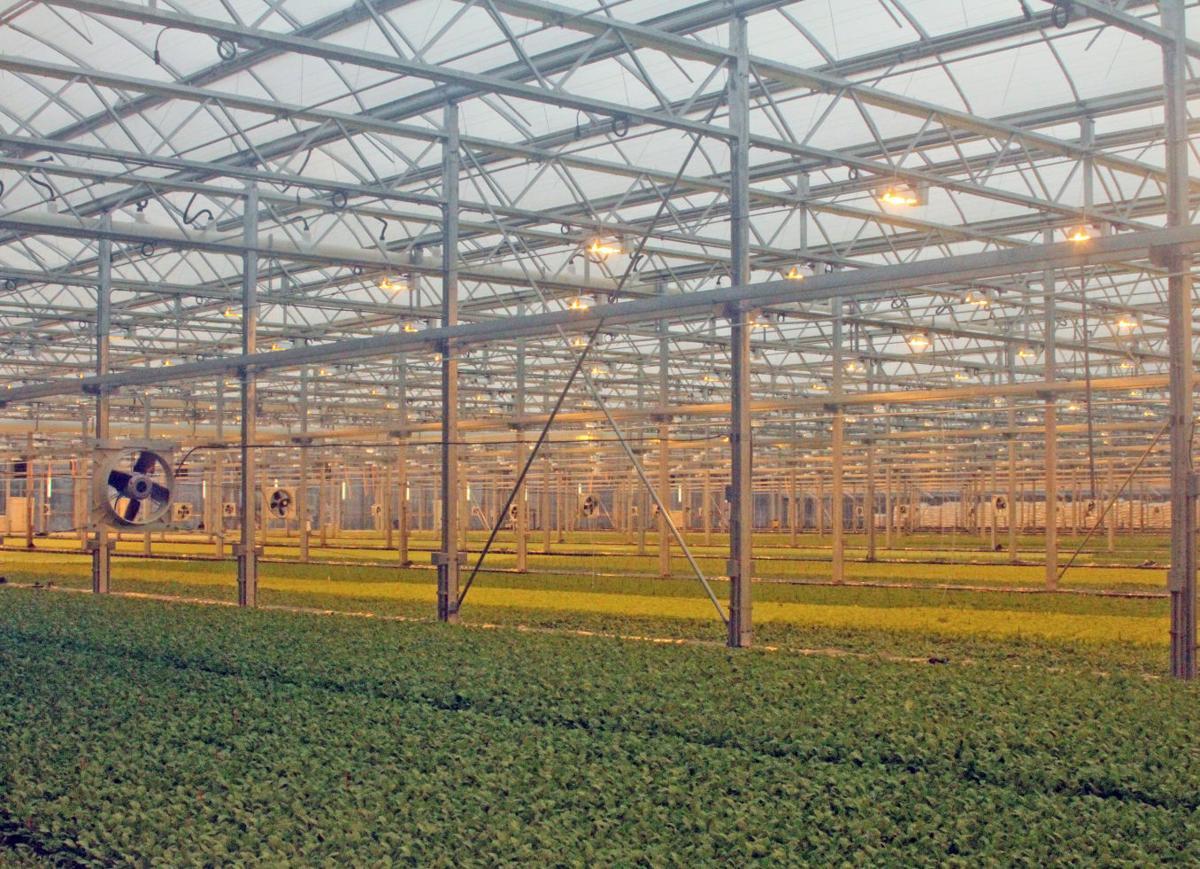 Gardening Culpeper Greenhouse Charitable Lifestyles