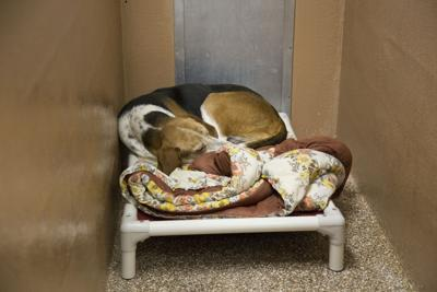 WAY 0520 Shelter 2