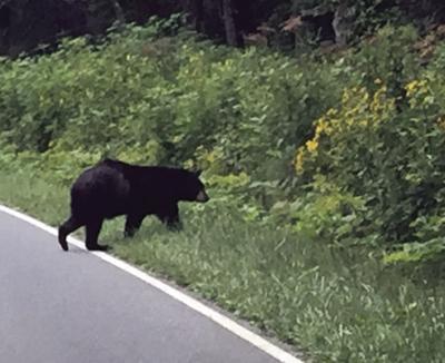 Bears where?