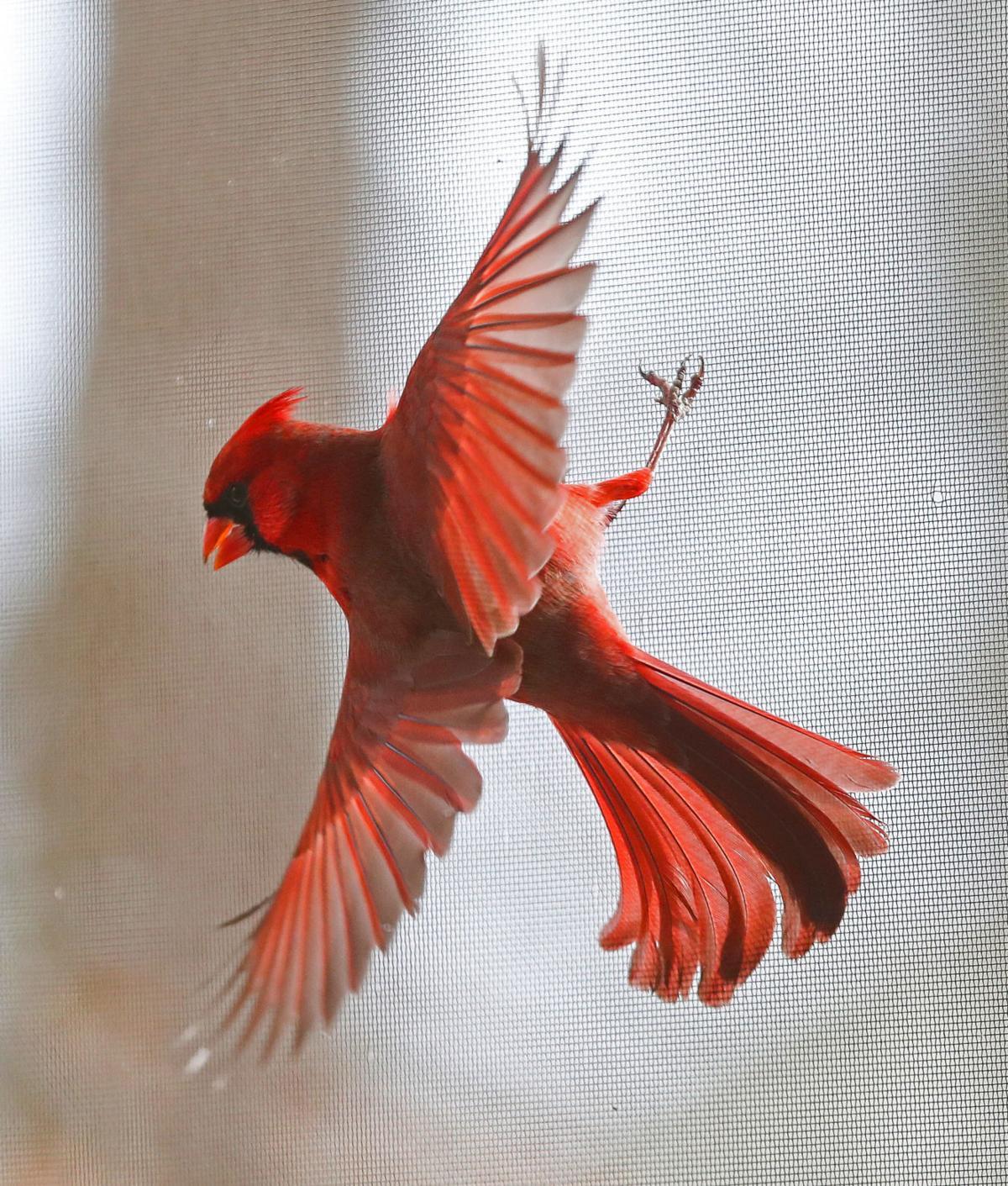 20200111_cdp_news_cardinal479.JPG