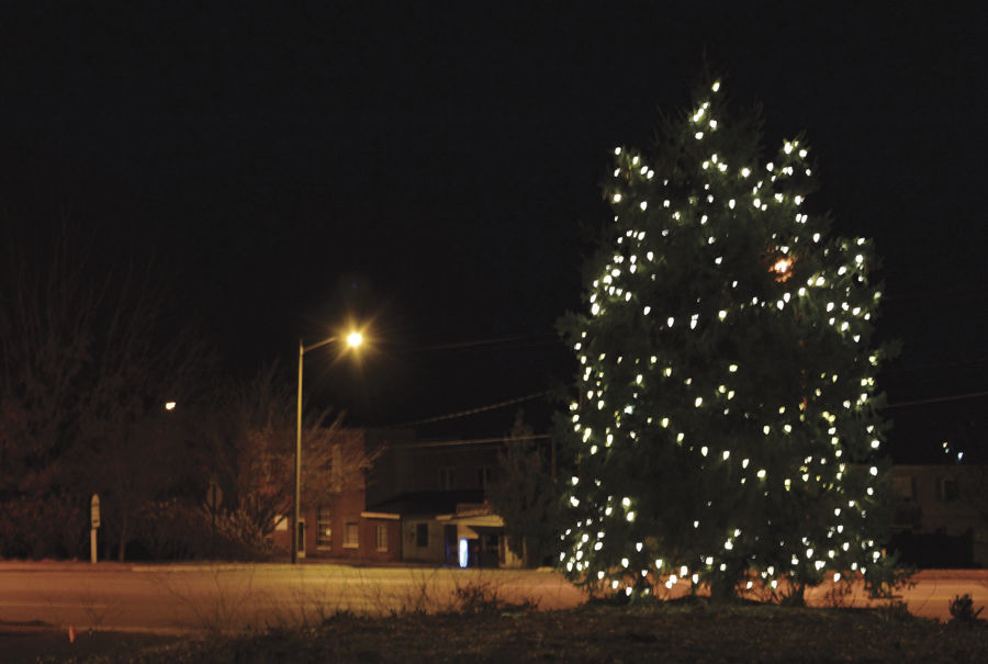 J-Orange tree lighting_4049.jpg