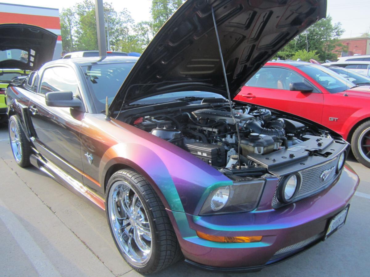 Purple Mustang