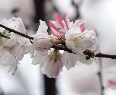 Tell Me Something Good: Spring has sprung
